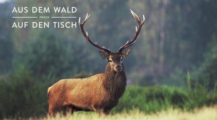 160310 EF_Wild